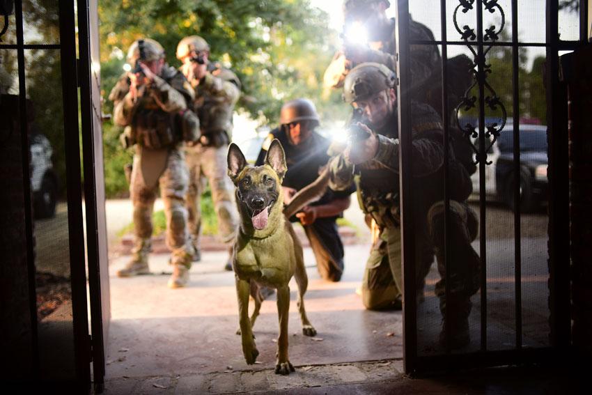 Tactical Training » Sacramento Sheriff K9 Association